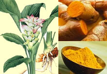 Turmeric Food Use